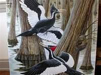 050428woodpecker