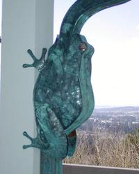 142_frog2