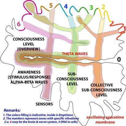 1_Consciousness_brain