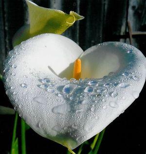 Heart_flower_1