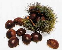 Chestnut_1