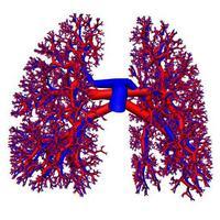 Lung_circulation
