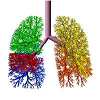 Lung_model