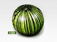 Watermelon640x480